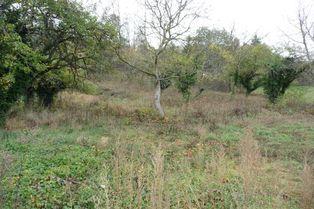 Annonce vente Terrain avec terrain constructible saint-jean-du-bruel