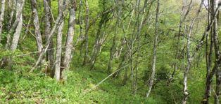 Annonce vente Maison poigny-la-forêt