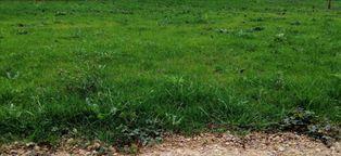 Annonce vente Terrain avec piscine saint-paterne-racan